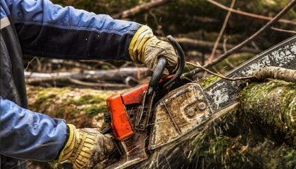 Chainsaw cutting into tree
