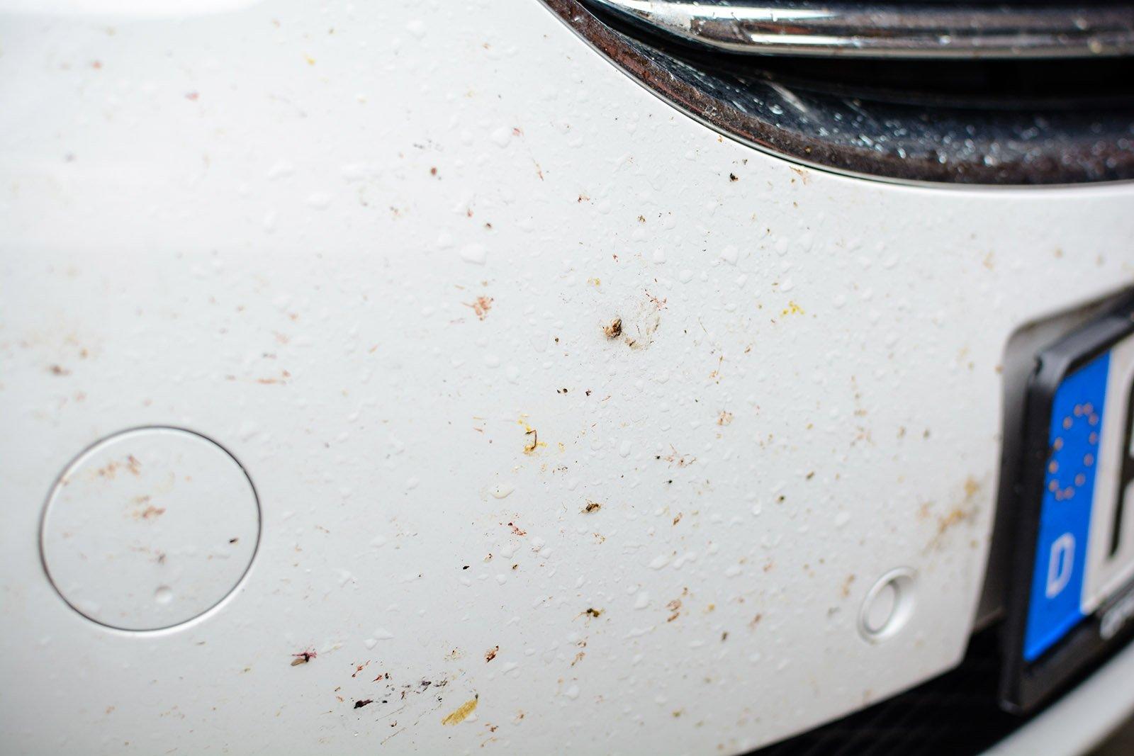 bugs splattered on a car's front bumper